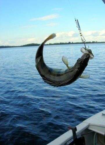 губерния бесплатные объявления спорт желание рыбалка